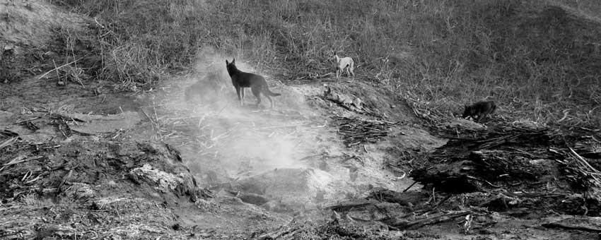 Yang Fudong, still from East of Que Village (Dog), 2007, B & W, 6 screen installation, High definition, 20 minutes 50 seconds. Courtesy the artist and Marian Goodman Gallery, New York / Paris.